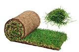 Grass Clippings Sod